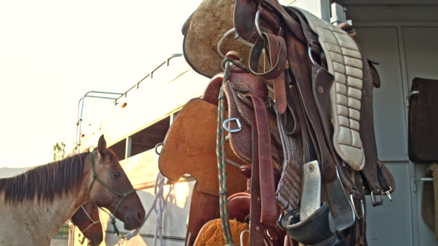 Real time video of Equestrian Equipment and Saddles with horse in the background video