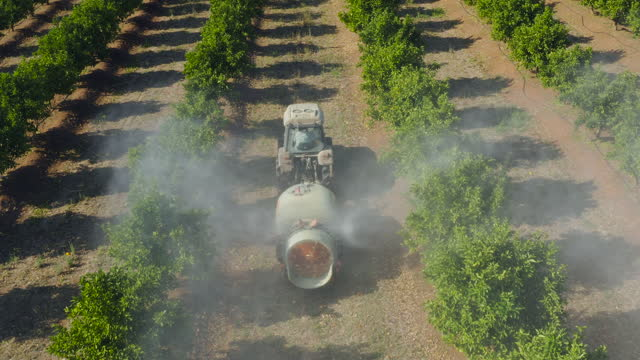Rear aerial view of a tractor spraying pesticide onto orange trees