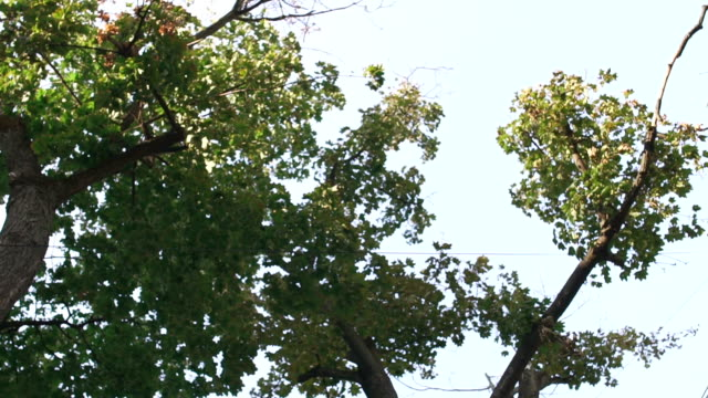 Rear background of trees Rear background of treetops. Branches of a tree with green leaves against the background of a summer sky. diving to the ground stock videos & royalty-free footage