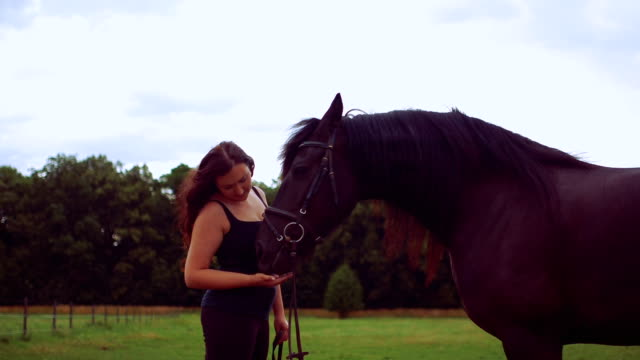 rear view of woman stroking horse on field - farm animals stock videos and b-roll footage