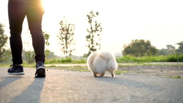 vídeos y material grabado en eventos de stock de slo mo - vista posterior con perro - training
