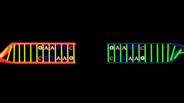 vídeos y material grabado en eventos de stock de en el adn recombinante - cromosoma