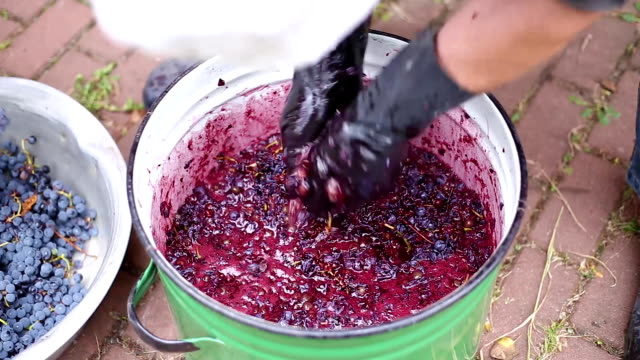 Recycling ripe grapes for wine production video