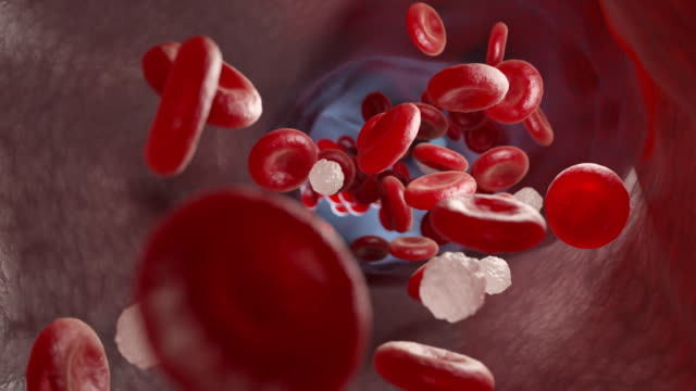 Red and white blood cells and in the vein Red and white blood cells and in the vein. 3D animation blood vessel stock videos & royalty-free footage