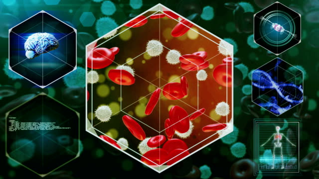 globuli rossi e bianchi - frequenza video stock e b–roll