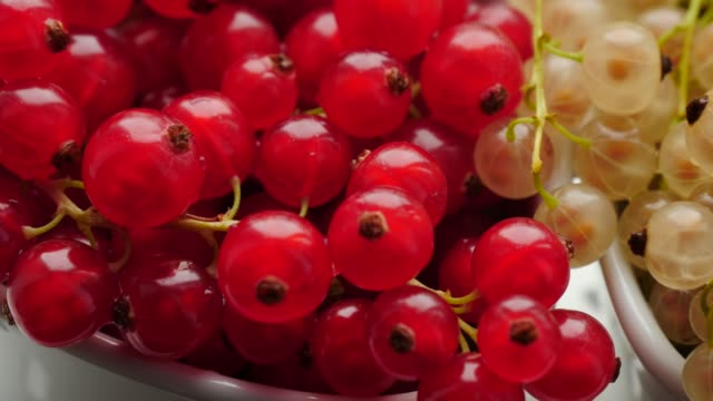red and white currant berries close up - ribes rosso video stock e b–roll