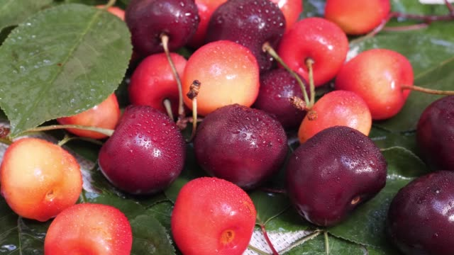 red and yellow cherries fruit with water drops and tree branch with green leaves - {{relatedsearchurl(carousel.phrase)}} video stock e b–roll