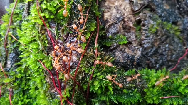 red ant on green moss