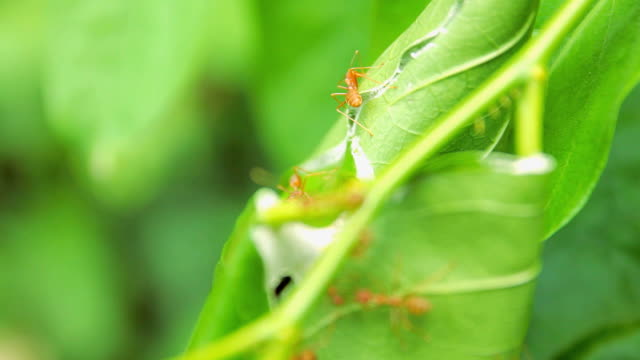 Red ant on tree video