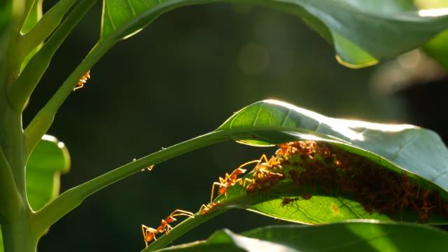 red ant on tree - arto inferiore animale video stock e b–roll