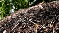 istock Red ants are building anthill. 536863228
