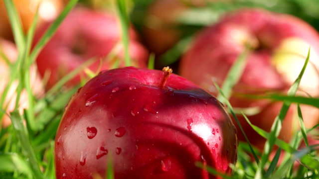Red apples with water drops in green grass panning time-lapse video