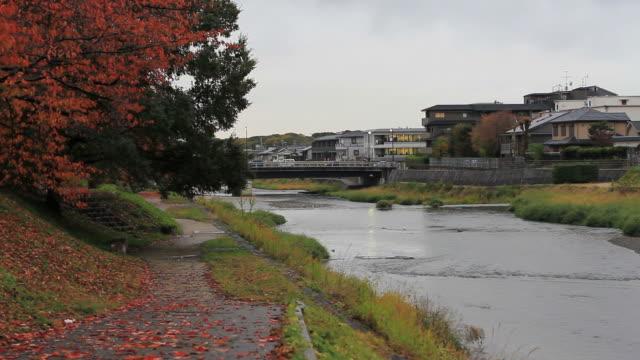 レッドの秋の葉の風景 - 川岸点の映像素材/bロール