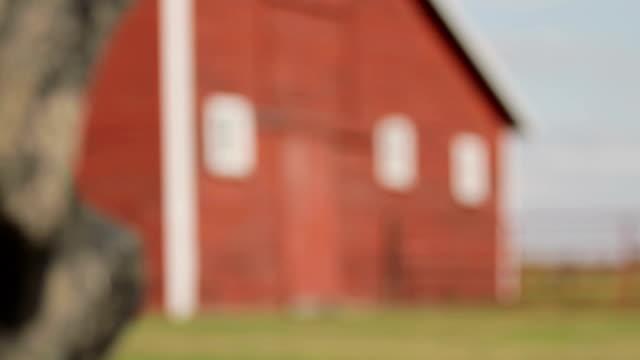 red barn classic (rack focus) - ahır stok videoları ve detay görüntü çekimi