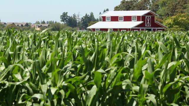 red barn, cornfield - ahır stok videoları ve detay görüntü çekimi