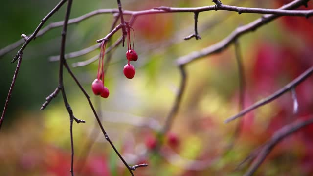 Red berries autumn natural background