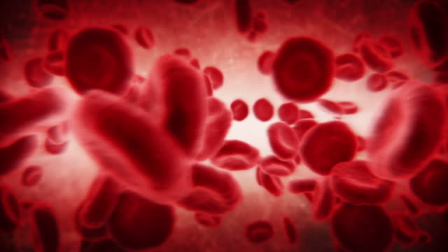 Red blood cells in artery. Dark. Loopable. 2 videos in 1 file. Red blood cells moving in the blood stream. Loopable, full HD. Animation created exclusively for iStockphoto. blood vessel stock videos & royalty-free footage