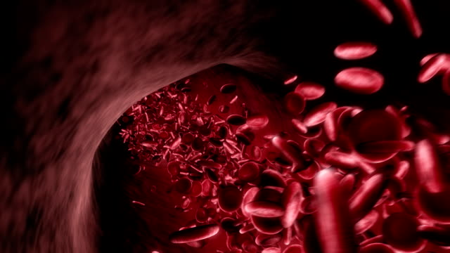 Red Blood Cells in Artery video