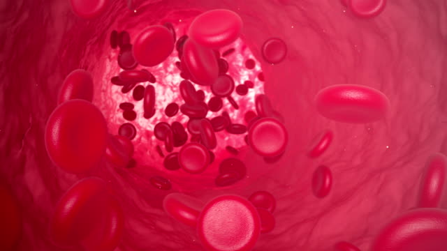 Red blood cells move along the vein. 3d animation video