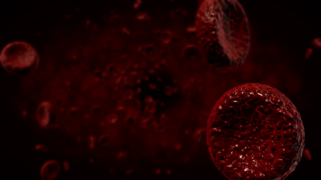 4K Red blood cells - Stock video Fly - Insect, Red blood cells , Bloodstream, Cancer Cell blood clot stock videos & royalty-free footage