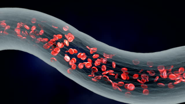 Red blood cells. video