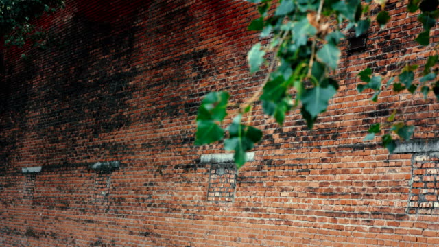 Red brick wall with Green branch near it video