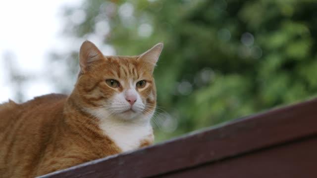 赤い猫はベンチに座っている。 - ベンチ点の映像素材/bロール