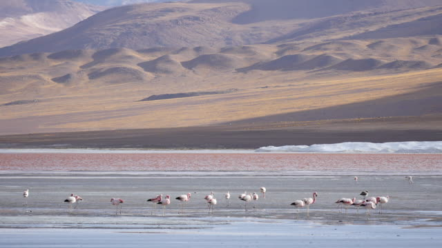 Red colored Lagune Atacama Bolivia Post Stabalized Video, because its very windy in this area. red-colored microorganisms stain the lake red under certain wind conditions wasser videos stock videos & royalty-free footage