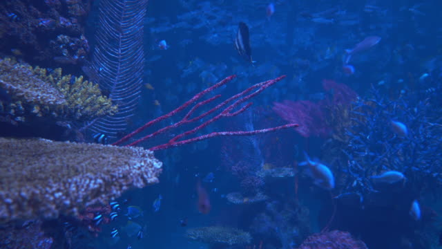 red coral in the sea sea fishes  swimming around red coral in the sea snapping turtle stock videos & royalty-free footage