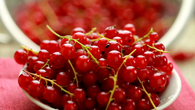 Red currant berry rotation video