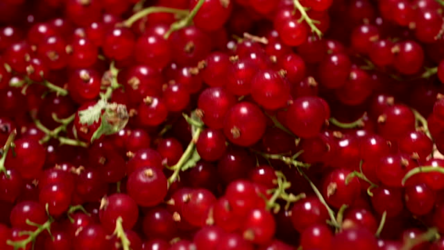 Red Currants video