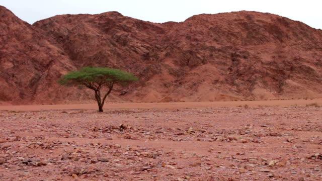 stockvideo's en b-roll-footage met rood woestijnlandschap van de sinai bergen - heilig geschrift