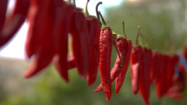 vídeos y material grabado en eventos de stock de rojo secado colgar ají en alambre para secarse. tiro de cerca. - cayena guindilla roja