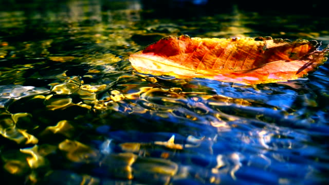 Red fallen leaf in water