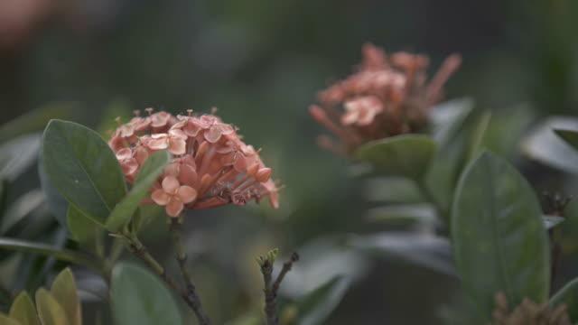 Red Flower - vídeo