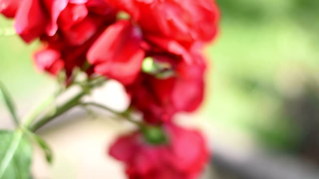 red flower - trillium video stock e b–roll
