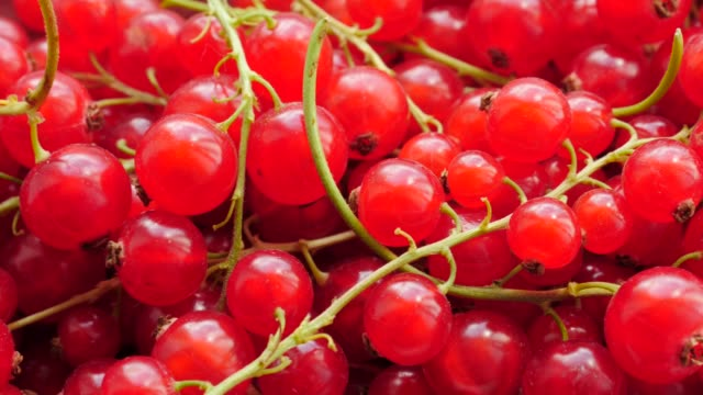 red fresh currant berries close up - ribes rosso video stock e b–roll