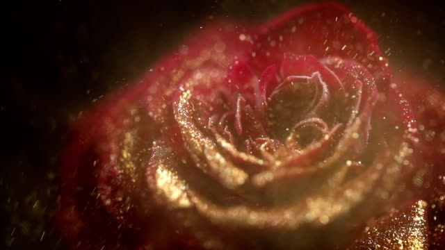 red frozen rose with golden sequins. nitrogen ice on rose - attività del fine settimana video stock e b–roll