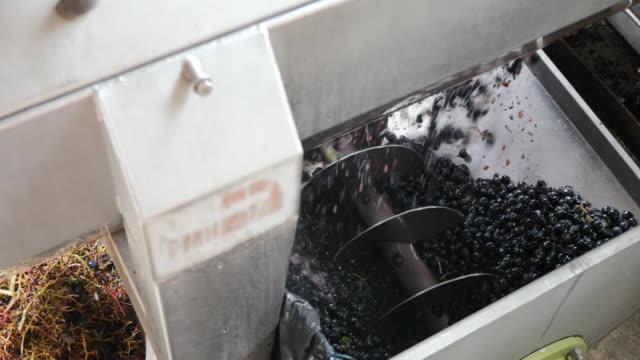 Red grapes in a machine. video