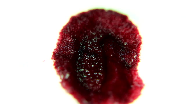 Red Ink / Blood absorbing into a Bandage MACRO video