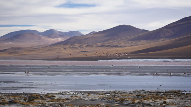 Red Lagune with salt crusts in the foreground Not stabalized Video, its very windy in this area. red-colored microorganisms stain the lake red under certain wind conditions wasser videos stock videos & royalty-free footage
