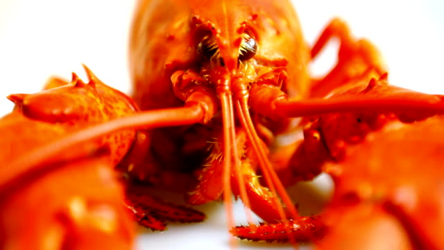 "red lobster "" - gar gekocht stock-videos und b-roll-filmmaterial"