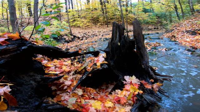 red maple leaf near a rushing stream