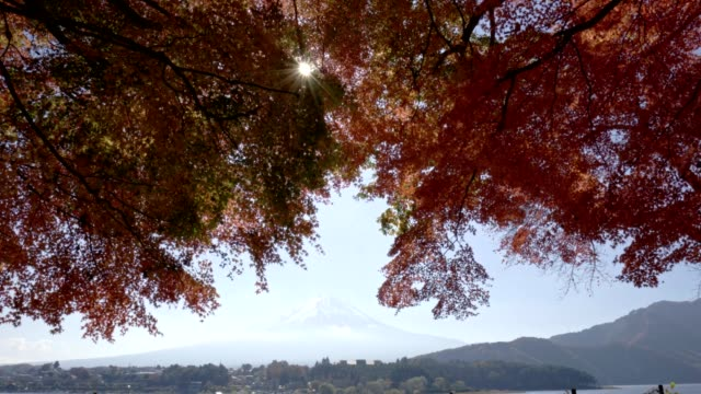 red maple leave with mt fuji in autumn season video
