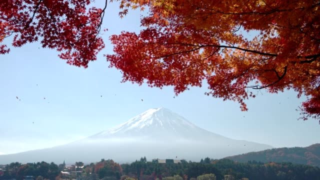 red maple leave with mt fuji in autumn season red maple leave with mt fuji in autumn season maple leaf videos stock videos & royalty-free footage