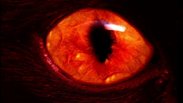red monster eye – Video