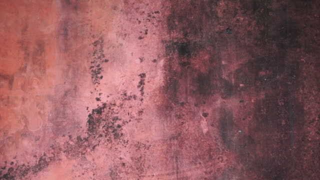 red old mold wall texture background video
