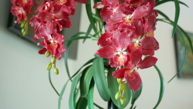 red orchid on tree video