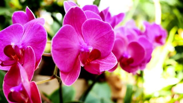 rote orchideen im garten. - orchidee stock-videos und b-roll-filmmaterial