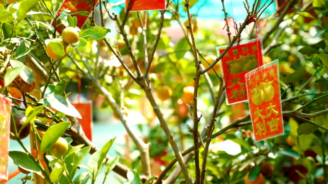 Red Packet Hanging on the Tree in Chinese New Year video
